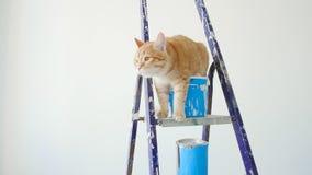 Concept vernieuwing en het schilderen in een nieuwe flat De rode grappige kattenzitting dichtbij a kan van verf stock videobeelden