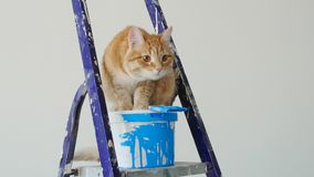Concept vernieuwing en het schilderen in een nieuwe flat De rode grappige kattenzitting dichtbij a kan van verf stock footage