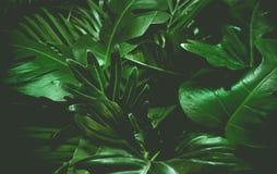 Concept vert de fond Palmettes tropicales, feuille de jungle images stock