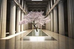 Cerisier à l'intérieur d'un bâtiment photos libres de droits
