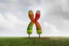 Concept vieillissant de santé de Telomere illustration libre de droits