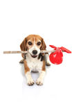 Concept voor vluchtelingshond, het huis van de huisdierenvakantie of verloren dier Stock Afbeelding