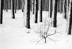 Concept winter landscape in black and white. Concept winter forest landscape in black and white Stock Photography
