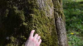 Concept of woman hand walk through mossy tree trunk. stock video footage