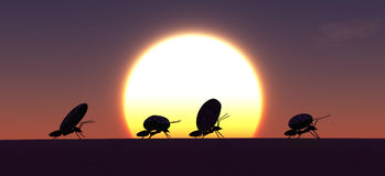 concept work, team of ants Royalty Free Stock Photos