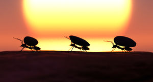 Concept work, team of ants Stock Photography
