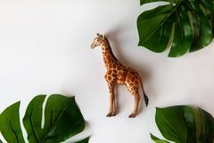Concept of World giraffe protection day. Little toy realistic giraffe cub in center of frame, green monstera leaves around edges. stock image