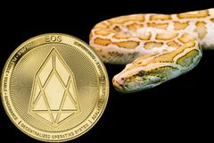 Gold Python and coin cryptocurrency EOS. Concept yellow snake and coin cryptocurrency EOS stock image