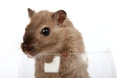 Conceptenfoto van een huisdierenknaagdier in een wijnglas stock fotografie