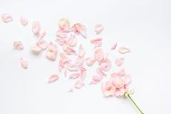 Conception à la mode avec la fleur rose dans la vue supérieure de lumière molle Photographie stock libre de droits