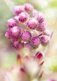Conception abstraite de fleur Image libre de droits