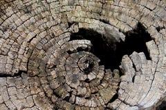 conception circulaire sur le bois images stock