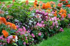 Conception colorée de fleur dans le jardin Image libre de droits