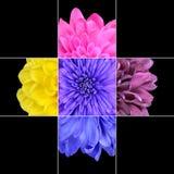 Conception colorée de mosaïque de fleur de chrysanthème Image stock
