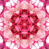 Conception concentrique pourpre de Mandala Kaleidoscopic de centre de fleur photographie stock