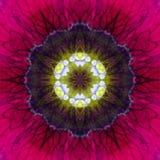 Conception concentrique pourpre de Mandala Kaleidoscopic de centre de fleur photographie stock libre de droits