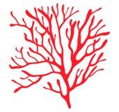 Conception d'icône de symbole de vecteur de silhouette d'algues rouges Bel illust illustration libre de droits
