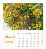 Conception 2018 d'insecte de calibre de calendrier de bureau de juillet valence Images libres de droits