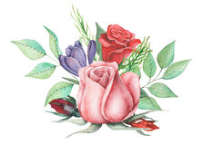 Conception d'invitation d'aquarelle avec le bouquet de compositions florales peintes à la main de fleurs d'isolement sur le fond  Images libres de droits