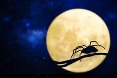 Conception d'une araignée contre la lune Photos stock