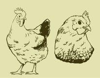 Conception de cru de poulet illustration de vecteur