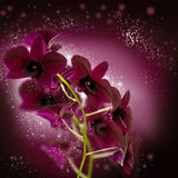 Conception de fleur d'orchidée Image libre de droits