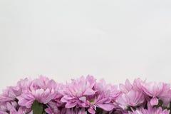 Conception de fleur de fleur - thème avec l'espace pour le texte Images libres de droits