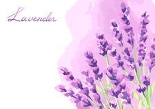 Conception de fond de fleurs de lavande Photo libre de droits