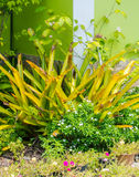 Conception de jardin avec des fleurs Photographie stock libre de droits