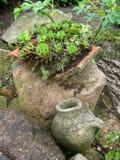 Conception de jardin Cactus Photographie stock libre de droits