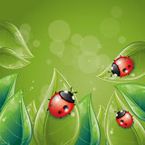 Conception de lames de vert avec la coccinelle Image stock