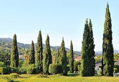 Conception de paysage avec des cyprès Photos stock