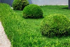 Conception de paysage des buissons photos libres de droits