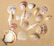 Conception de ramassage de Seashell photographie stock libre de droits