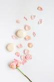 Conception de ressort avec les macarons et la fleur dans la vue supérieure de lumière molle Images libres de droits