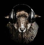 Conception de T-shirt de musique de moutons du DJ ou d'écouteurs de RAM Photographie stock libre de droits