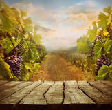 Conception de vignoble Photos stock