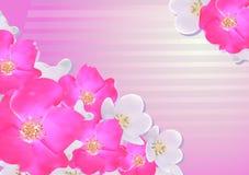 Conception des cartes postales, invitations de couvertures Sakura Conception l'épousant Photos libres de droits