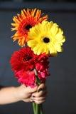 Conception disponible de fond de décoration de fleur de Gerbera Photo libre de droits