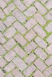 Conception en pierre de trottoir de texture de plancher d'herbe Image libre de droits