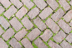 Conception en pierre verte de trottoir de texture de plancher Images stock