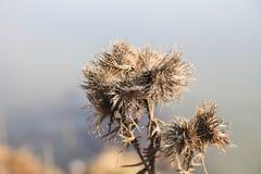 conception, fleurs sèches, fond indistinct Photo libre de droits