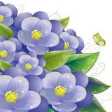 Conception florale avec la violette Image stock