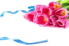 Conception florale avec les tulipes roses et le ruban bleu d'isolement sur le blanc photos stock