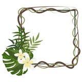 Conception florale de feuille d'été de cadre tropical aloha Photographie stock