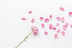 Conception florale de ressort avec des pétales de rose dans la maquette de vue supérieure de lumière molle Photo stock