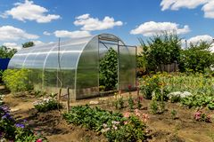 Conception of gardening, healthy food and eco products. The greenhouse with growing cucumbers in the garden with flowers royalty free stock photos