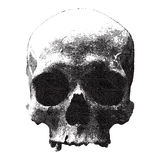 Conception gravée pour la copie de T-shirt avec le crâne illustration libre de droits