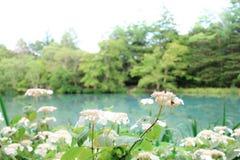 Conception japonaise de paysage Photos libres de droits