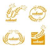 Conception jaune d'art de vecteur de logo de signe de bannière de nourriture de produits de grain de riz de Paddy Wheat illustration de vecteur
